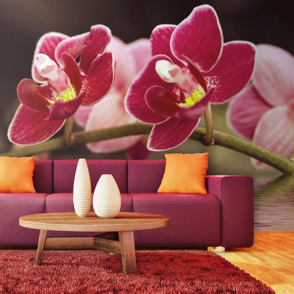 Fotomurale fiori d 39 orchidea riflessi nell 39 acqua for Orchidea acqua