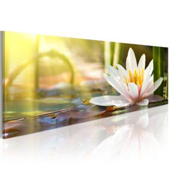 Quadro con Ninfea - Lotus' Glow